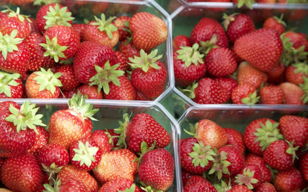 Les fraises sont là !